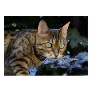 Sneaking Bengal Cat Large Business Cards (Pack Of 100)