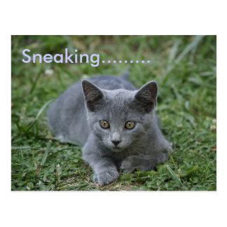 Sneaking......... Postcard
