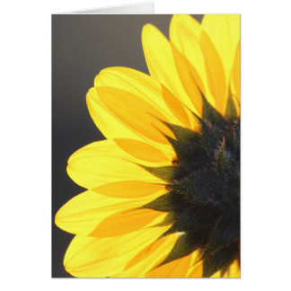 Sneaking Up on a Sunflower Card