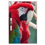 Sneaky Birds Dry Erase Whiteboards