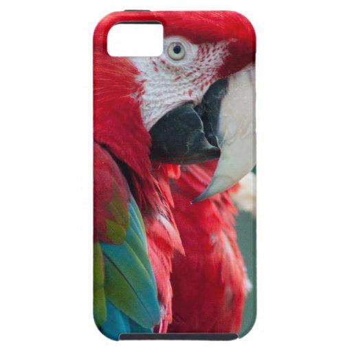 Sneaky Birds iPhone 5 Case