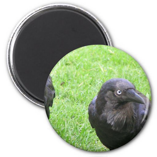 Sneaky Crows 2 Inch Round Magnet