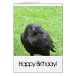 Sneaky Crows Greeting Cards
