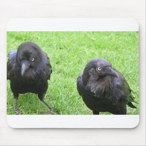 Sneaky Crows Mouse Pads
