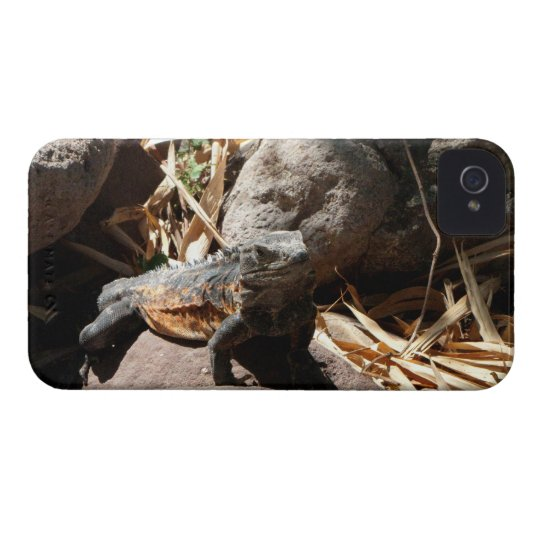 Sneaky Iguana iPhone 4 Cover
