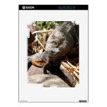 Sneaky Iguana Skin For The iPad 2