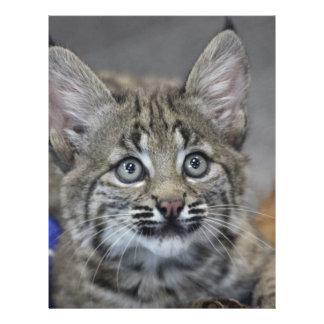 Sneaky Kitten Letterhead