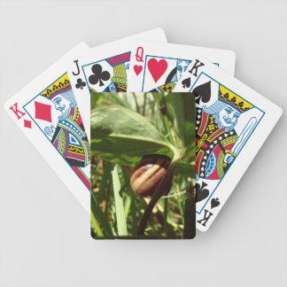 sneaky snail poker deck