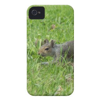 Sneaky Squirrel iPhone 4 Cases