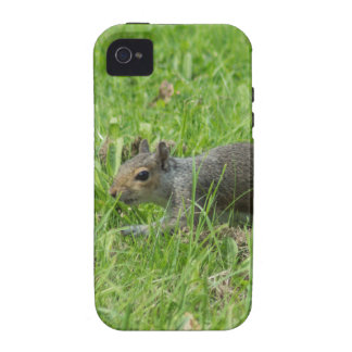 Sneaky Squirrel Vibe iPhone 4 Cover