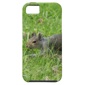 Sneaky Squirrel iPhone 5 Cases