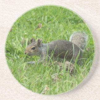 Sneaky Squirrel Coaster