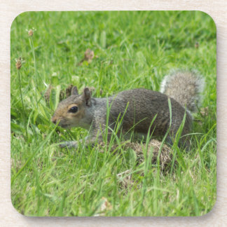 Sneaky Squirrel Drink Coasters