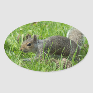 Sneaky Squirrel Oval Sticker