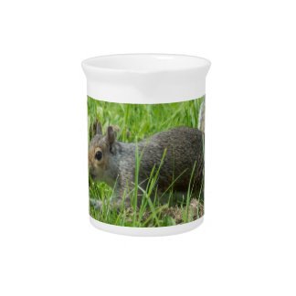 Sneaky Squirrel Drink Pitchers
