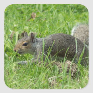 Sneaky Squirrel Square Sticker