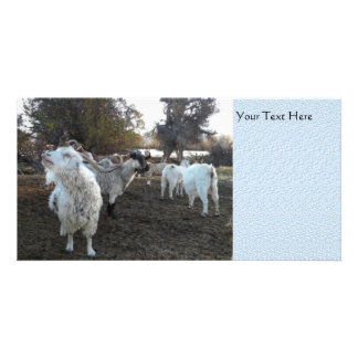 Sneezy Goat Photo Greeting Card