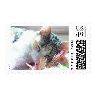 Snickers los sellos del gatito