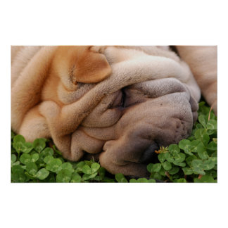 Sniffing Clover Poster