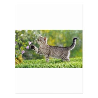 Sniffing Flowers Kitten Postcard