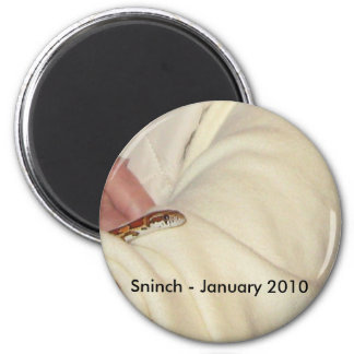 Sninch the Baby Corn Snake Magnet