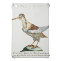 Snipe, c.1767-76 (hand coloured engraving) cover for the iPad mini