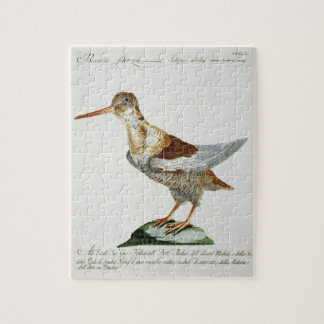 Snipe, c.1767-76 (hand coloured engraving) puzzle