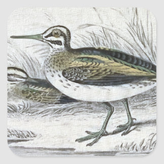 """Snipe"" Vintage Bird Illustration Square Sticker"