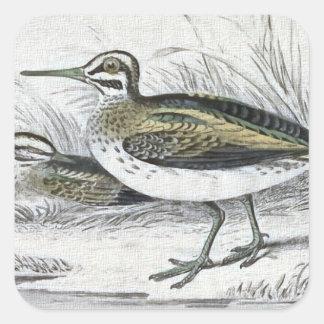 """Snipe"" Vintage Bird Illustration Square Sticker"