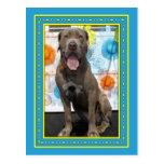 Snoop - Neopolitan Mastiff -3F Post Card