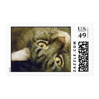 Snoopie the cat postage