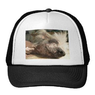 snooze trucker hat