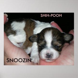 SNOOZIN', 2 WEEK SHIH-POO, S... PRINT