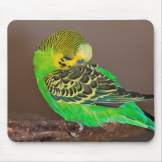 Snoozing Budgie Mousemat Mouse Pad