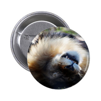 Snoozing Pinback Button