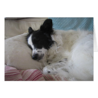 snoozing collie card