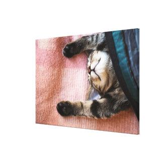 Snoozing Kitten Canvas Print