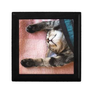 Snoozing Kitten Gift Box