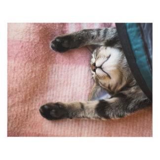 Snoozing Kitten Panel Wall Art