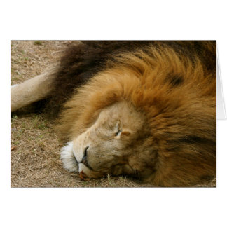 Snoozing Lion Card