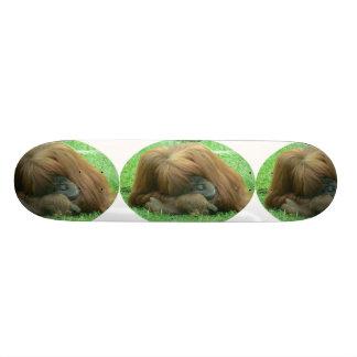 Snoozing Orangutan Ape Skateboard