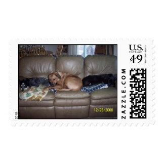 Snoozing Postage Stamp