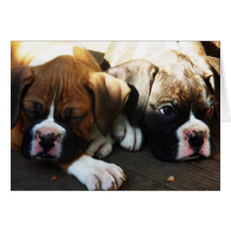 snoozing pups greeting card