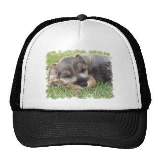 Snoozing Schnauzer Baseball Hat
