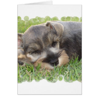 Snoozing Schnauzer Greeting Card