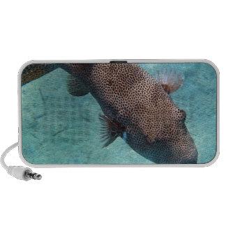 snorkeling in the red sea travelling speaker
