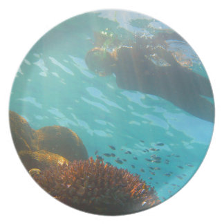 Snorkeling over an underwater reef party plates