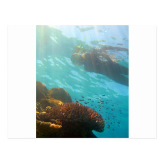 Snorkeling over an underwater reef postcard