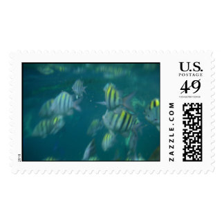 snorkeling stamp