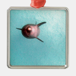 snorkeling with dolphin metal ornament